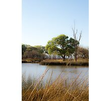 Calm Beaver Pond Photographic Print