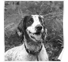 Dog portrait, spaniel in bracken Poster