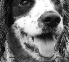 Dog portrait, spaniel in bracken Sticker