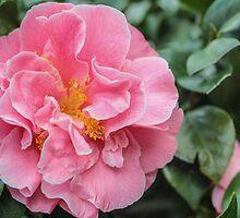 Pretty Pink by Zappa653