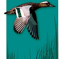 Garganey by Julia  Barber