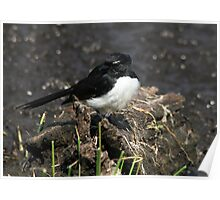 Mr Wagtail Poster