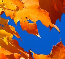 Leaves of fall....Cornucopia by jammingene
