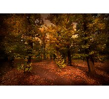 Shadows of Forest Photographic Print