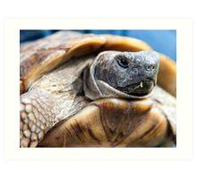 Portrait of a Tortoise Art Print
