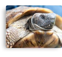Portrait of a Tortoise Metal Print
