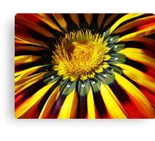 Colourful petals Canvas Print