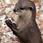 Otter by Togfather