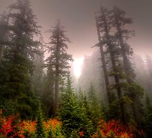 Some Colors, Some Fog, Some Love by Charles & Patricia   Harkins ~ Picture Oregon