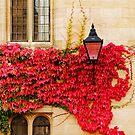Autumn in Oxford by Irina Chuckowree