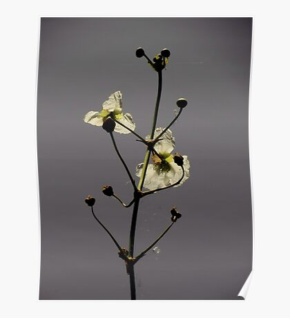 Botanical Beauties ~ Part One Poster