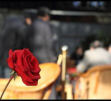 Red rose in a tea house by jonshock