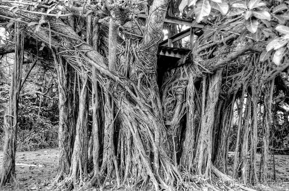 The Tree House on Camperdown Road in Nassau, The Bahamas by Jeremy Lavender Photography