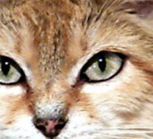 Arabian Sand Cat! Sticker