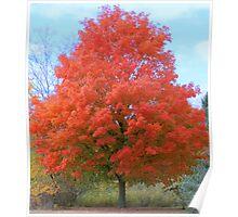 An Autumn Beauty Poster