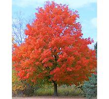An Autumn Beauty Photographic Print