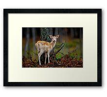 Fallow Deer Framed Print