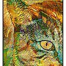 My Cats Eye in Palms by modernartcards