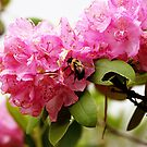 Blossoms and Bees by Sonya Lynn Potts