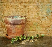 Flower Pot by Barbara Ingersoll