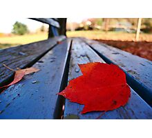 fall on park bench Photographic Print