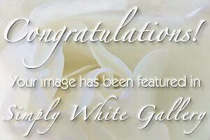 banner entry-Simply White Gallery by Celeste Mookherjee
