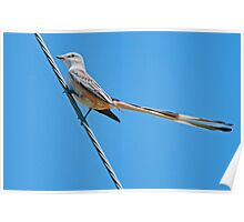 Scissor-tailed Flycatcher on High Wire Poster