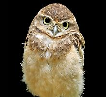 Burrowing Owl - iPhone Case by Mark Hughes