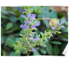 Bugle Weed Poster