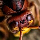 THE FIVE EYES OF A HORNET by Joe Saladino