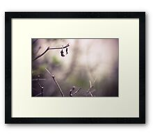 *Desolate Framed Print