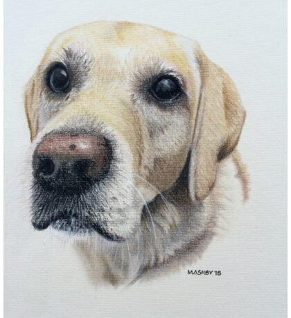 Nina the beautiful golden labrador Sticker