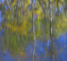 Seasonal Reflection's by Bill Coughlin