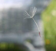 Dandelion Fluff by sarataylor