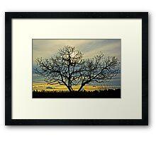 Loney tree at sunset Framed Print