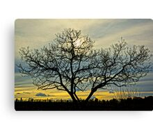 Loney tree at sunset Canvas Print