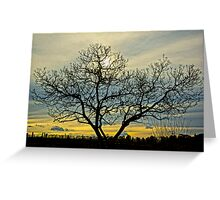 Loney tree at sunset Greeting Card