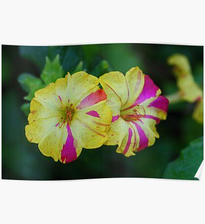 Sidewalk Blooms Poster
