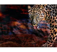 Night Hunt Photographic Print