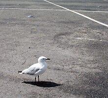Gull Three by Robert Phillips