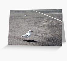 Gull Three Greeting Card