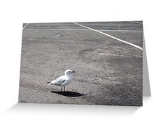 Gull Three Greeting Card