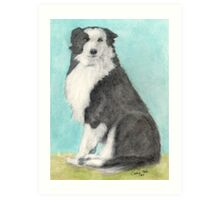 Border Collie Dog Sitting Cathy Peek Animals Art Print