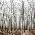 Frosted Tree Farm by mrmattb