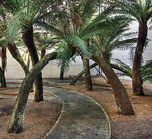 Tree fern Garden by Chris Allen