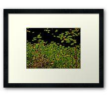 Sprinkles of green Framed Print