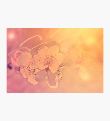 Sweet Blossoms Photographic Print