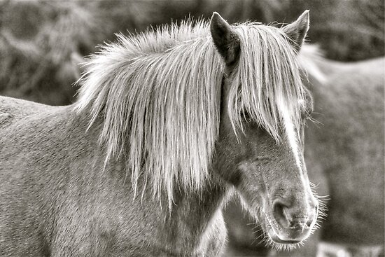 Wild Pony by Monte Morton