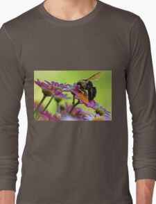 Bumble Bee and Beautiful Marguerite Daisies Long Sleeve T-Shirt