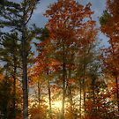 Rays of the Setting Sun by Megan Noble